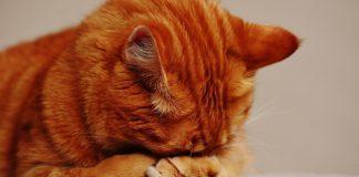 Trucuri pisici. Ce sa faci daca pisica ta nu are stare noaptea. Asa o convingi sa doarma