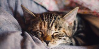 Ce inseamna, de fapt, cand visezi pisici. Dictionarul viselor