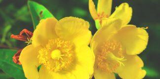 Cele mai bune cicatrizante naturale. Secretele ascunse in plante