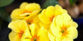 Planta minune pentru bolile respiratorii. Face miracole pentru gripa si raceala