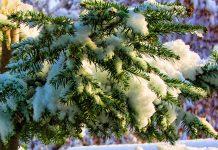 Prognoza meteo ANM 1-13 decembrie 2020. Temperaturi anormale pentru aceasta perioada. Cand vine gerul