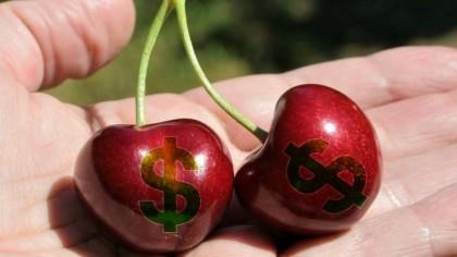 Cele mai scumpe cireșe de pe piață. Prețul IREAL plătit pentru 500 grame. Îți iei mașină cu suma asta