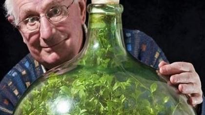 Un român a plantat o sămânță într-o damigeană, în anul 1960. Ce s-a întâmplat cu vasul peste 61 de ani